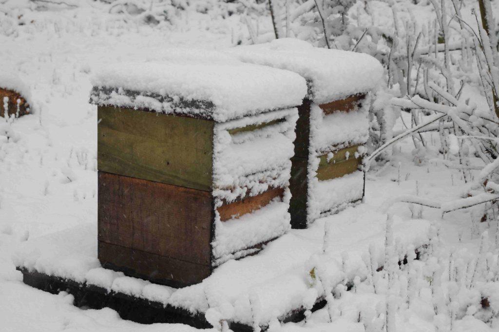 Bienenstöcke schneebedeckt